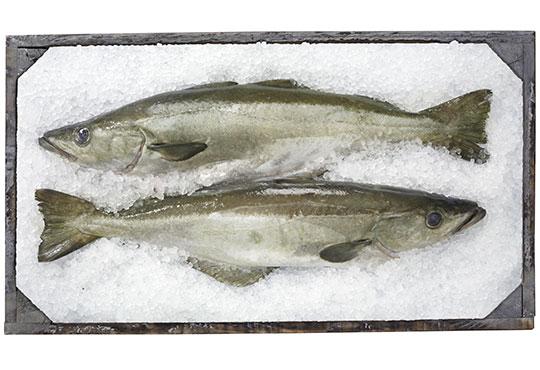 importation de poisson en suisse