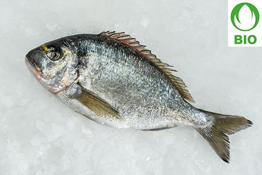 importateur de poissons bio en suisse